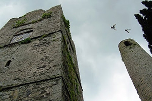 Patrick Comerford's photograph of birds flying above the towers beside Saint Columba's Church in Swords